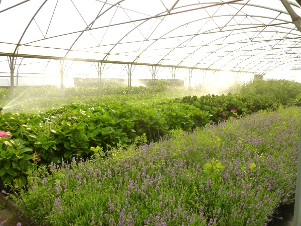 Jardinerie Berger à Montbrison 42600 Loire